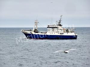 Мурманские рыболовы добыли 500 тонн рыбы в уходящем году