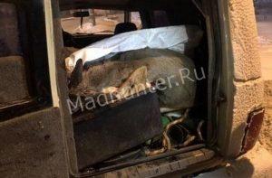 Полицейские задержали браконьеров с косулями в багажнике