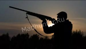 Пятеро на одного: пять омских охотников застрелили одну косулю
