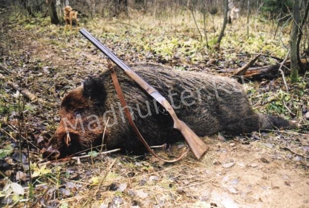 Сразу восемь человек понесет наказание за убитого кабана