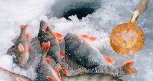 В Калужской области идет отличный клев мирной рыбы