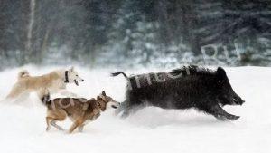 В Пензе браконьеры убивают косуль