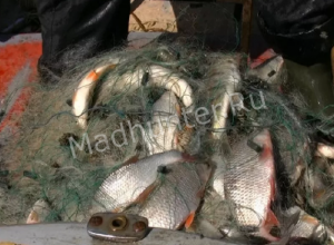 150 килограммов рыбы, добытой браконьерским способом, изъяли в Астрахани