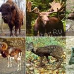 Копытные животные список