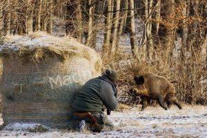 Правоохранители Краснодара ищут браконьеров. За помощью сотрудники «Краснодарской охоты» обратились в отделение полиции. Специалисты по охоте просят возбудить уголовное дело по данному случаю, чтобы установить точно, от чего погибли дикие кабаны. Дело в том, что кабаны были найдены мертвыми в тех местах, где охота запрещена законом – на особо охраняемой кубанской территории. Как сообщается в ведомстве: на территории лесов Кубани найдено две тушки дикого кабана. Произошло это третьего января. Ветеринары уже взяли пробы для установления некоторых обстоятельств. Ветеринарные исследования выявили, что в тушах животных не найден вирус африканской чумы, а это значит, что животное могло погибнуть от рук человека. Так же, пресс-центр ведомства охраны сообщается, что за последний период не было обнаружено ни одного признака, когда бы человек травил, преднамеренно или нет, диких кабанов, в том числе и кабанов. Отметим, что в тушах кабанов также не обнаружено ни одного признака охоты на них: огнестрельные ранения отсутствовали.