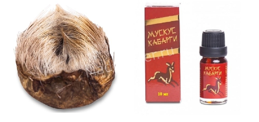 Мускус Кабарги