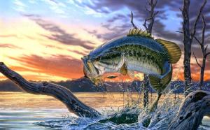 Новые поправки в рыбалке, которые приняты законом уже в 2019 году и ждут принятия в 2020 году