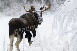 Охота обошлась в 240 000 рублей.