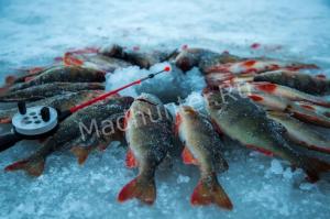 Карельскому рыбаку, убившему своего отца – вынесет суд приговор