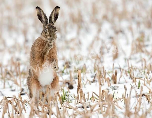 Татарстан закончил охотиться на зайцев