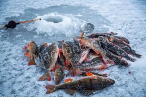 Теперь, за прогулку по опасному льду придется заплатить