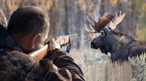 Запрет на лосиную охоту в Подмосковье начнет действовать уже с 15 января
