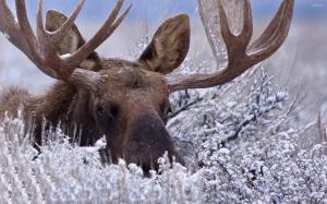 Добросовестный браконьер: мужчина выплатил за охоту на лося 240 000 рублей