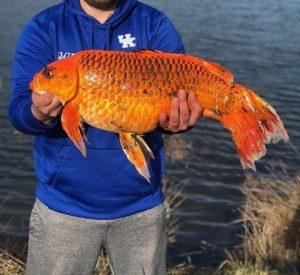 И попалась на заграничный крючок рыба. Не простая, а Золотая. Еще и 10 килограммов весит
