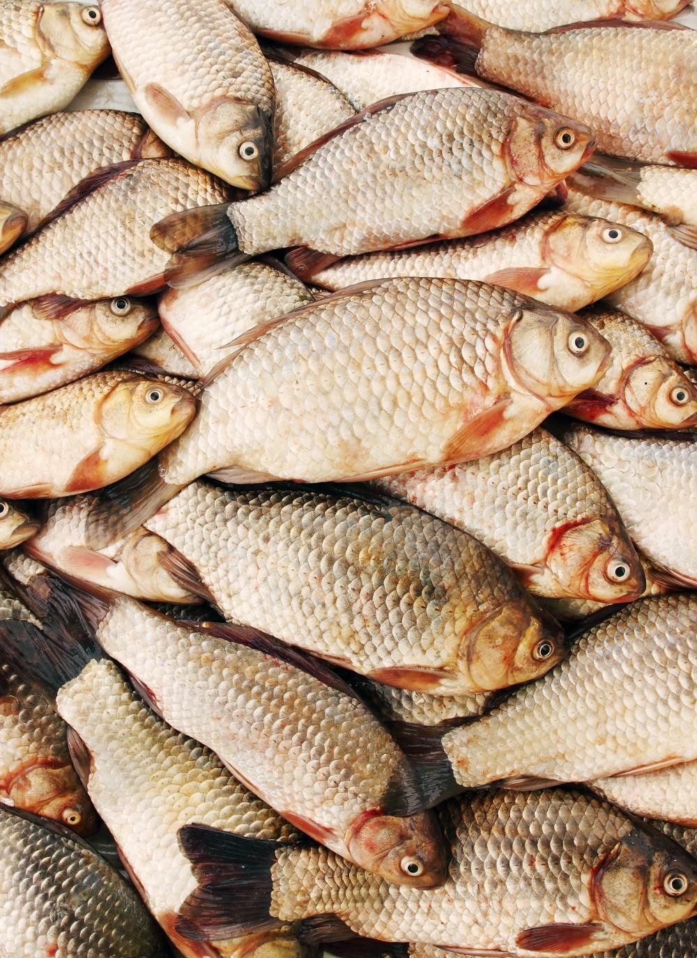 много рыбы весной