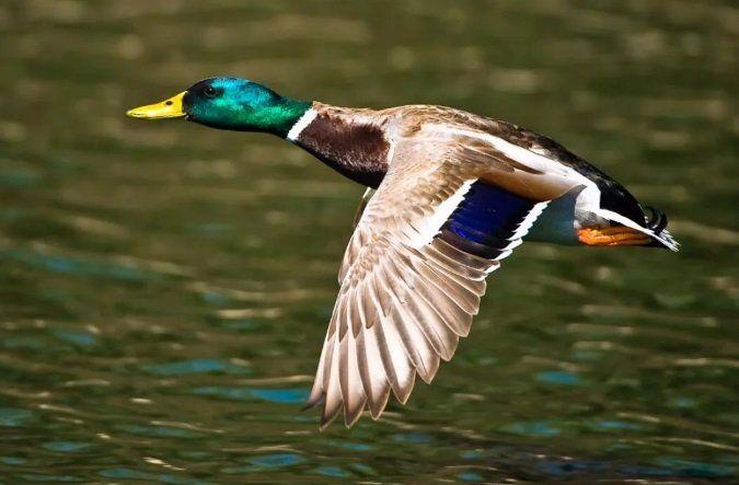 Может, перестанем убивать птиц РГО за отмену птичьей охоты