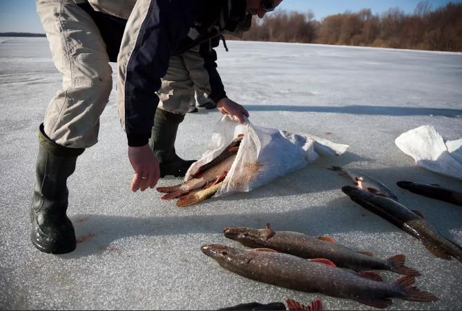 На Ямале выявлено рекордное браконьерство по причиненному ущербу