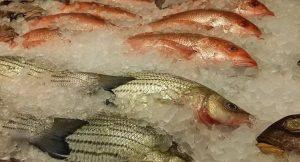 На рынках республики Коми не появится потенциально опасная рыба