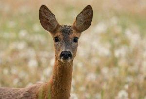Орловские охотники не побоялись понести ответственность за 19 убитых животных. Что скажет суд?