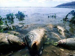 Почему погибла вся рыба в реке Гжать: уже есть предположение