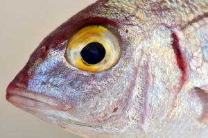 Рыбак из Пензы придумал новый способ чистки рыбы