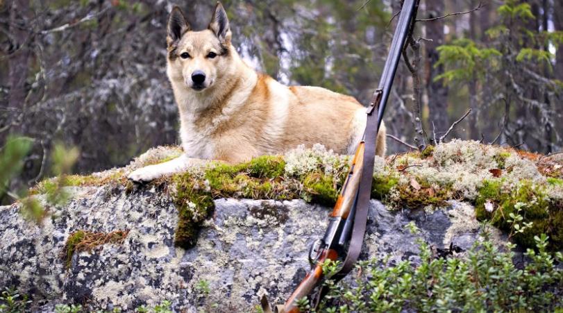1 апреля подарит нешуточные новые правила охоты