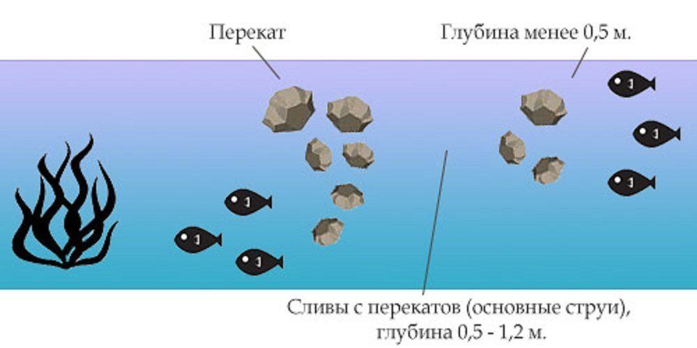 Где искать рыбу хариус