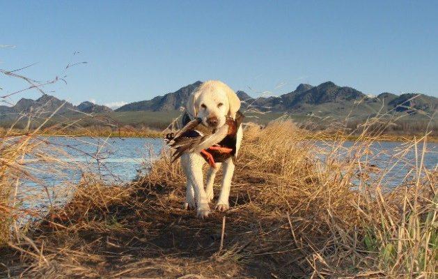 Кировские охотники будут по-новому получать лицензии на охоту