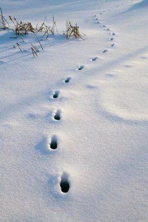 Крутинского браконьера отыскали по горячим следам
