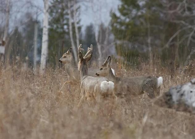 Кузбасские браконьеры покусились на жизнь человека