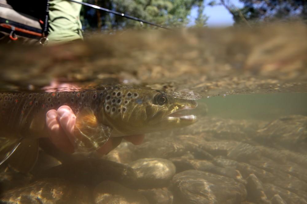 Ловля форели весной - рыбалка в апреле-мае