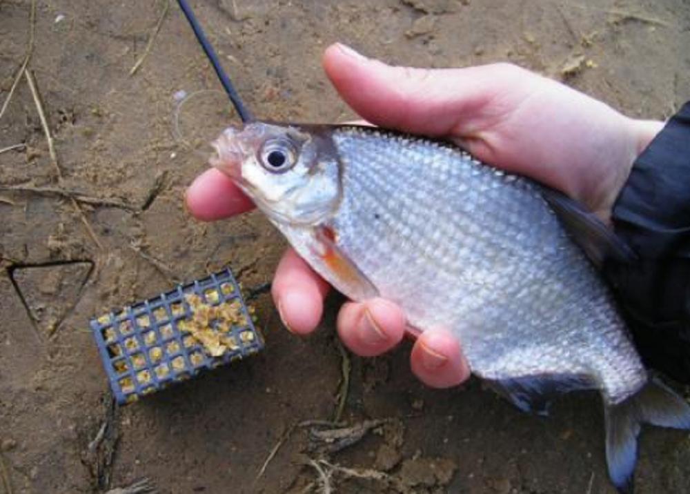 Ловля густеры весной - рыбалка в апреле