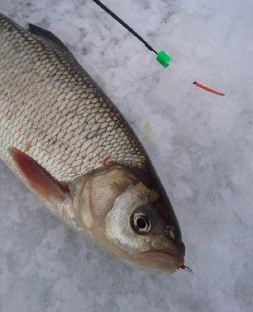 Ловля язя - мартовская рыбалка