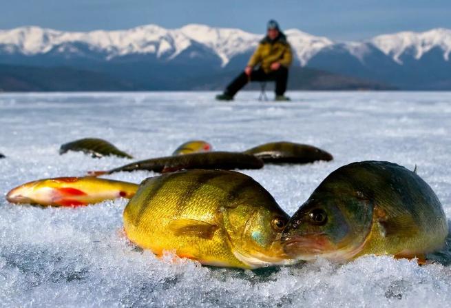 Москвич, хочешь жить – плати за свое спасение на рыбалке!