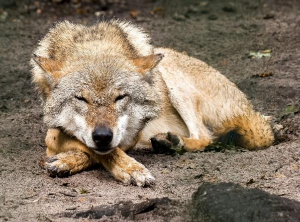 Охотничий надзор просит не убивать раненых животных во время охоты