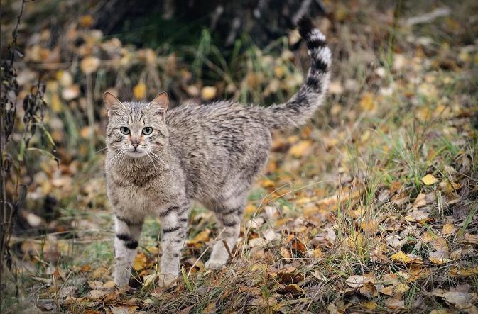 Охотник – пенсионер из Ставрополя покусился на жизнь краснокнижной кошки