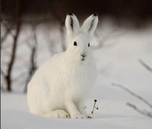 Пензенский рыбак нашел убитого зайца