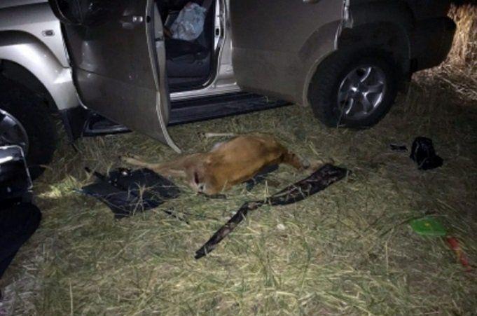 Стоили ли охота и убитые косули 900 000 рублей?