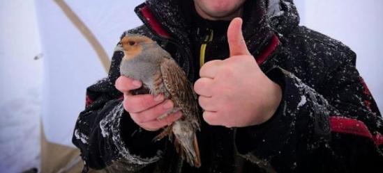 Сызранские рыбаки не только рыбу ловить, горазды, но и птиц – да еще и голыми руками
