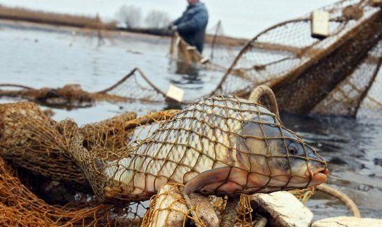Закон не остановит браконьера