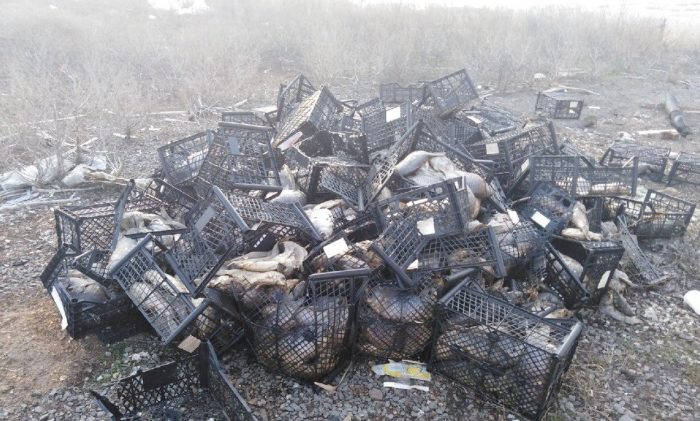 Тухлую рыбу нашли на нелегально организованной ростовской свалке