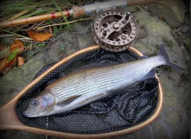 Браконьеры не скупятся на ловлю рыбы в охраняемых зонах