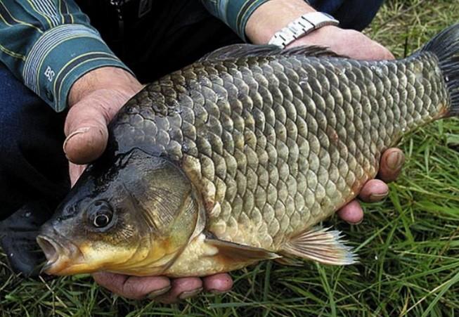 Чем подкормить карася в период весенней рыбалки