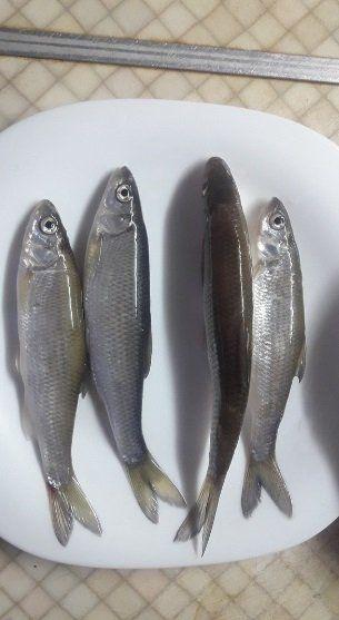 Что за необычную рыбу выловил сызранский рыбак?