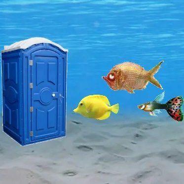 Мучает ли вас вопрос писает ли рыба