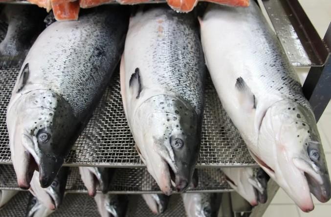 Повар одного из ресторанов сумел украсть более 5 тонн рыбы