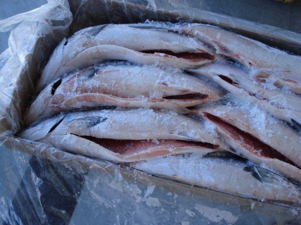 В корм животным пойдет 18 тонн лососевой рыбы