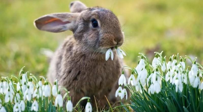 В крымских лесах увеличилось количество лисиц и зайцев