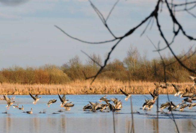 Везение во время охоты помешало уйти браконьерам с места преступления