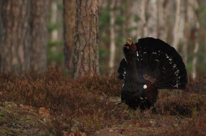 Власти Хакассии отменили весенний сезон охоты